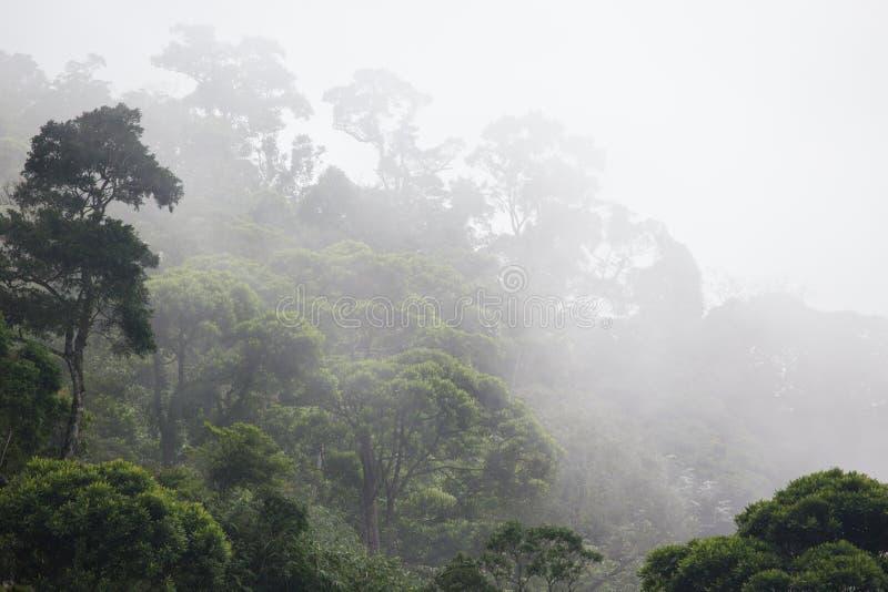 有薄雾的密林森林 库存照片