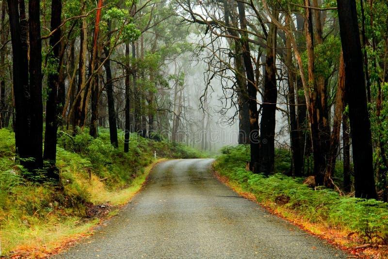 有薄雾的山路 免版税库存图片
