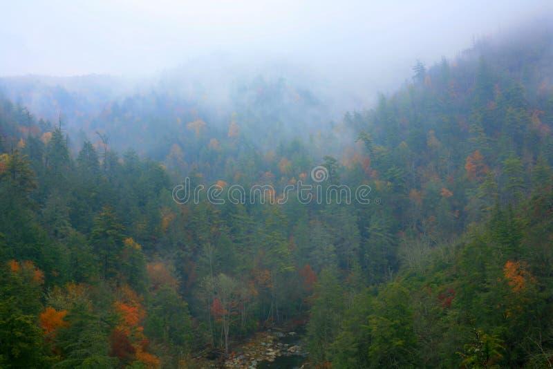 有薄雾的峡谷 库存图片