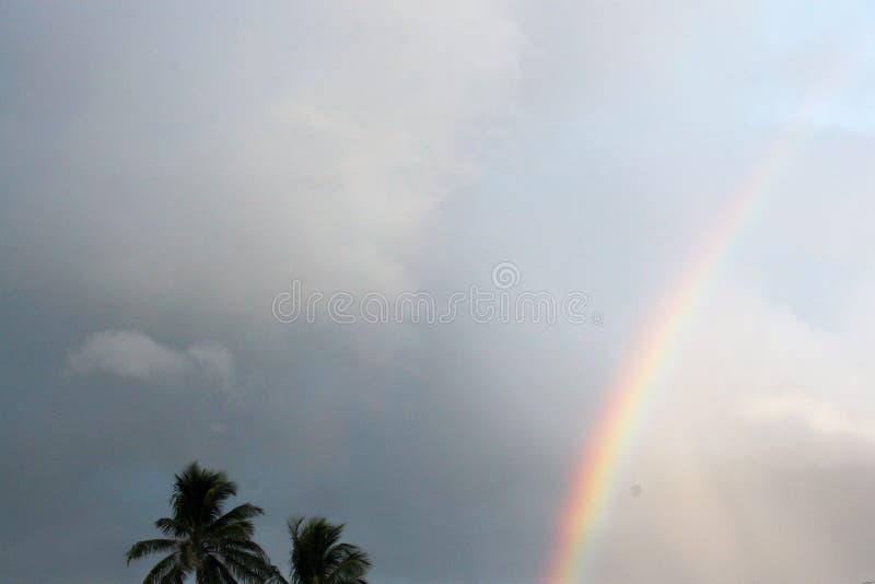 有薄雾的彩虹在一朦胧的天在有棕榈树的一个热带地点 免版税库存照片