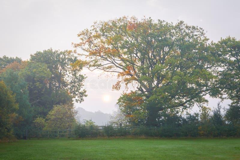 有薄雾的日出在肯特 图库摄影
