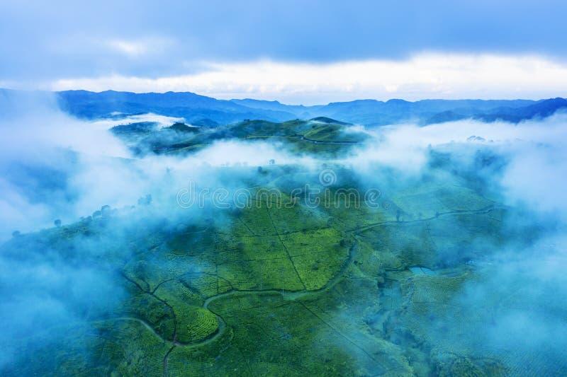 有薄雾的早晨之前盖的茶园 免版税库存图片