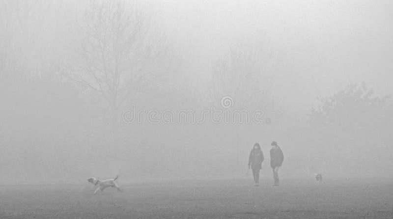 有薄雾的早晨狗步行者 免版税库存照片