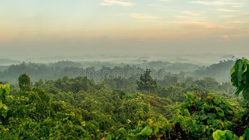有薄雾的早晨美丽的景色在多小山森林里 免版税库存照片