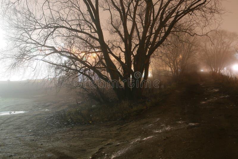 有薄雾的晚上结构树 库存图片