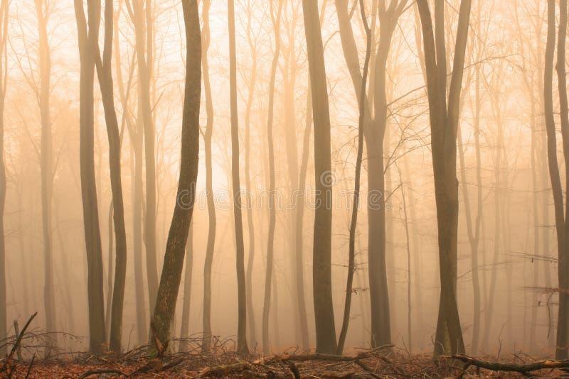 有薄雾的木头 库存图片