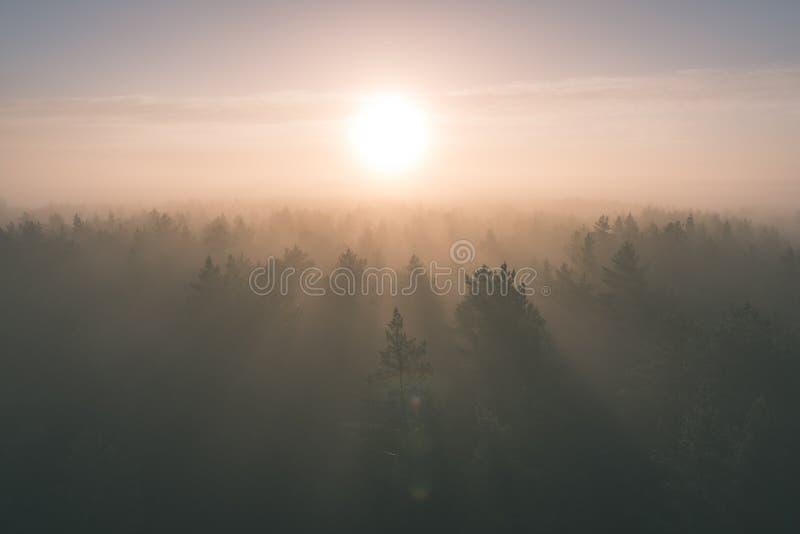 有薄雾的森林全景庄严日出的在树- 免版税库存图片
