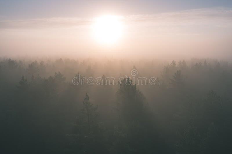有薄雾的森林全景庄严日出的在树- 免版税图库摄影