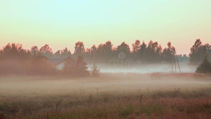 有薄雾的森林全景,减速火箭,葡萄酒样式神色 秋天风景,雾全景在日落时间的森林里 图库摄影