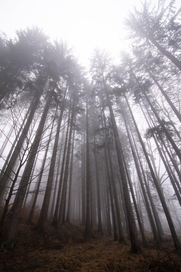 有薄雾的森林在特兰西瓦尼亚山的秋天 免版税库存图片