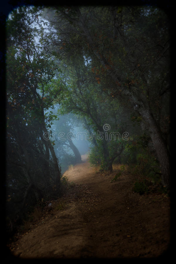 有薄雾的森林足迹 库存图片