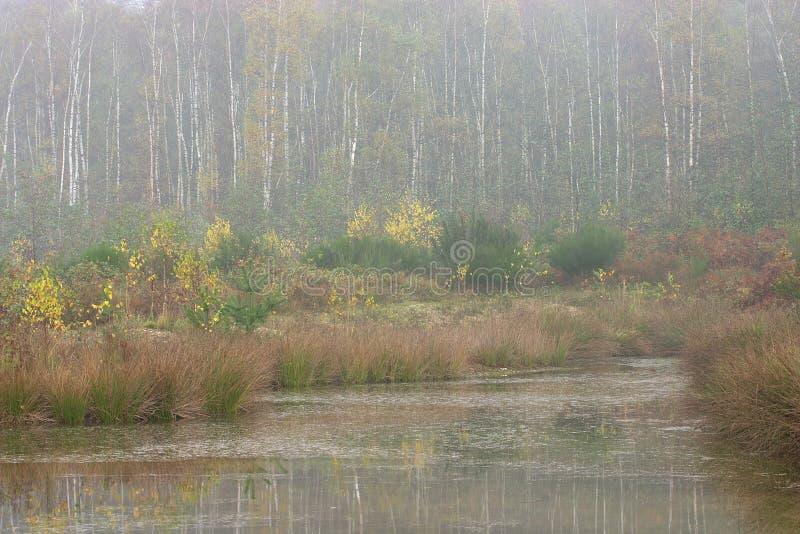 有薄雾的池塘 免版税库存图片