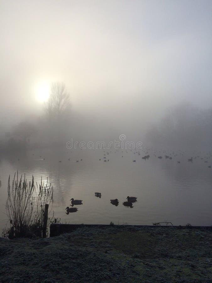 有薄雾的湖 库存照片