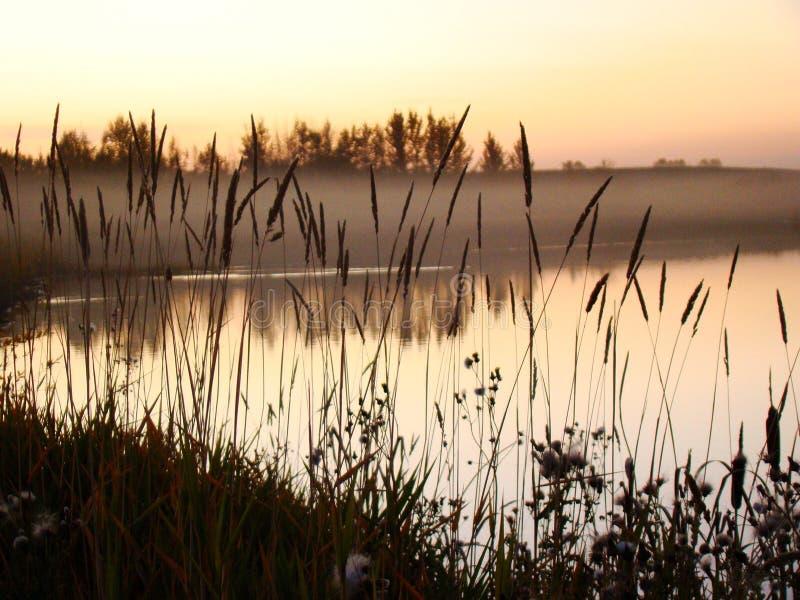 有薄雾的湖 免版税图库摄影