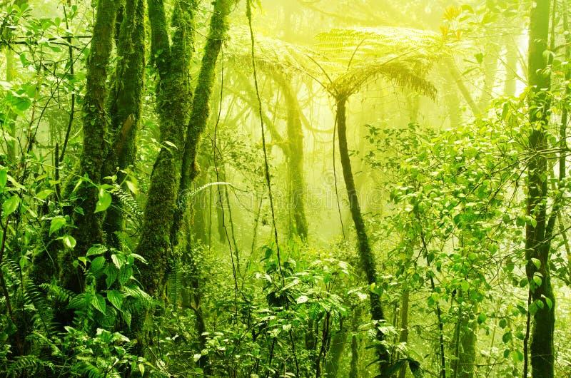 有薄雾的热带绿色生苔雨林 免版税库存照片