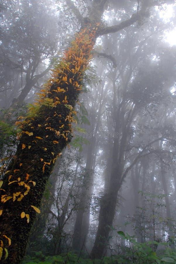 有薄雾的热带绿色雨林, Ang钾自然痕迹 库存图片