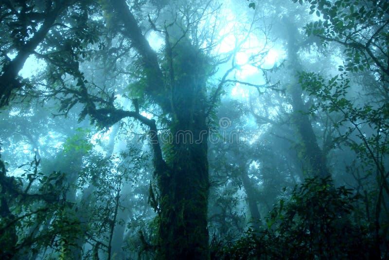 有薄雾的热带绿色雨林, Ang钾自然痕迹 免版税库存照片