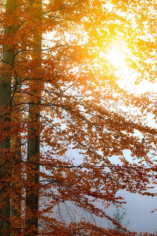 Download 有薄雾的秋天公园在有雾的天 库存照片. 图片 包括有 自治权, 红色, 自然, 晒裂, 白兰地酒, 朦胧 - 59103126