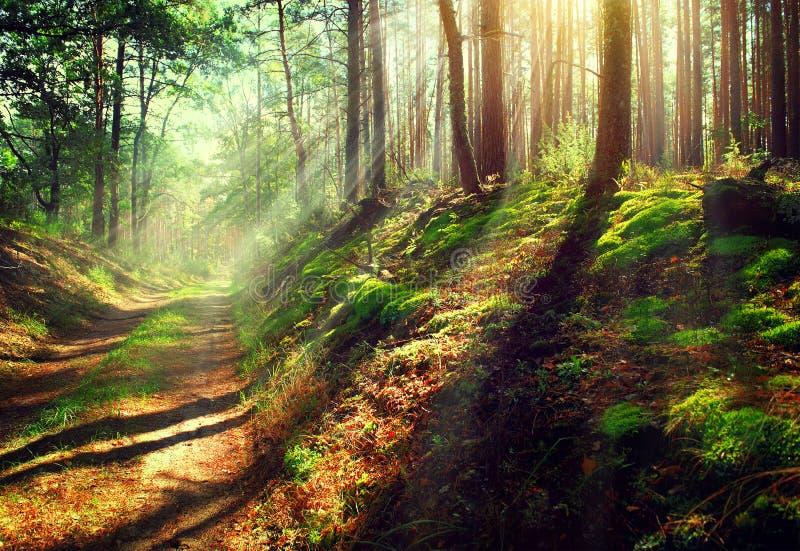 有薄雾的老秋天森林 免版税库存照片