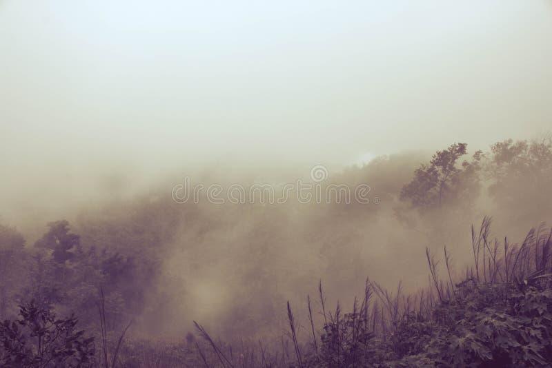 有薄雾的背景 库存照片