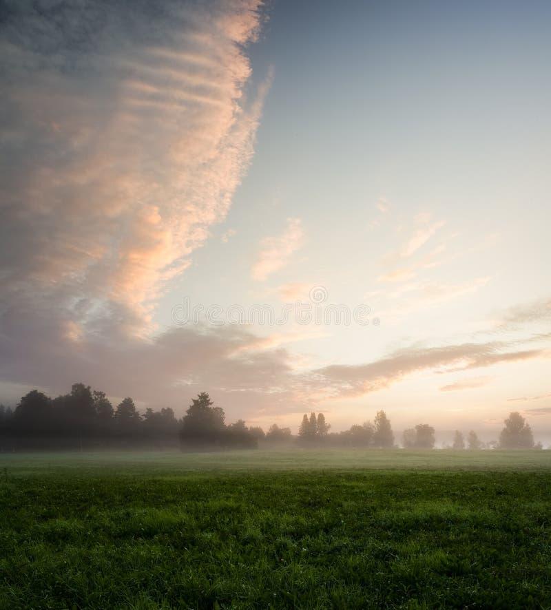 有薄雾的草甸在黎明 免版税库存图片