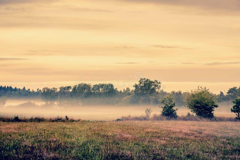 有薄雾的草甸风景 库存照片