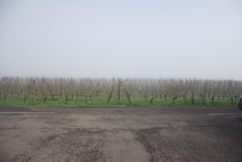 有薄雾的藤 免版税库存图片