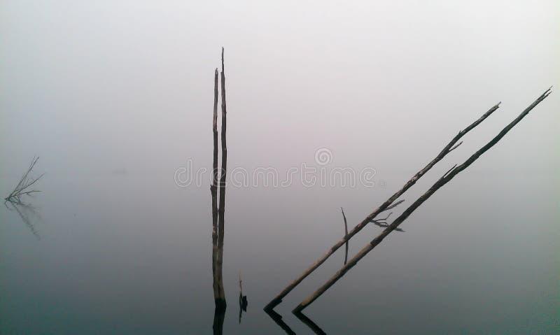 有薄雾的蠕动的黑暗的自然池塘树 免版税库存图片