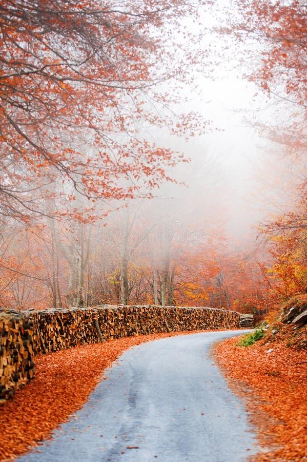 有薄雾的路在秋天 免版税库存图片