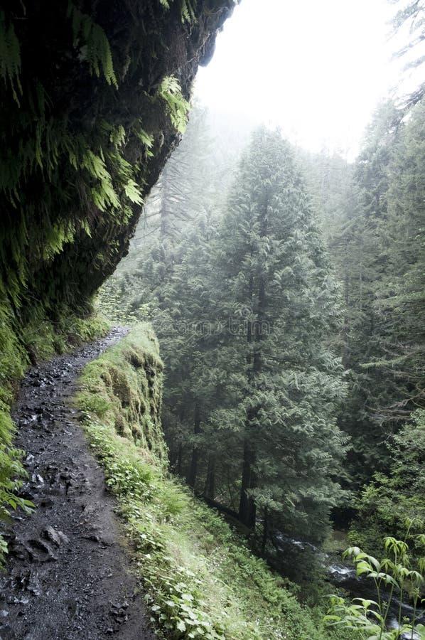 有薄雾的路径 免版税库存图片