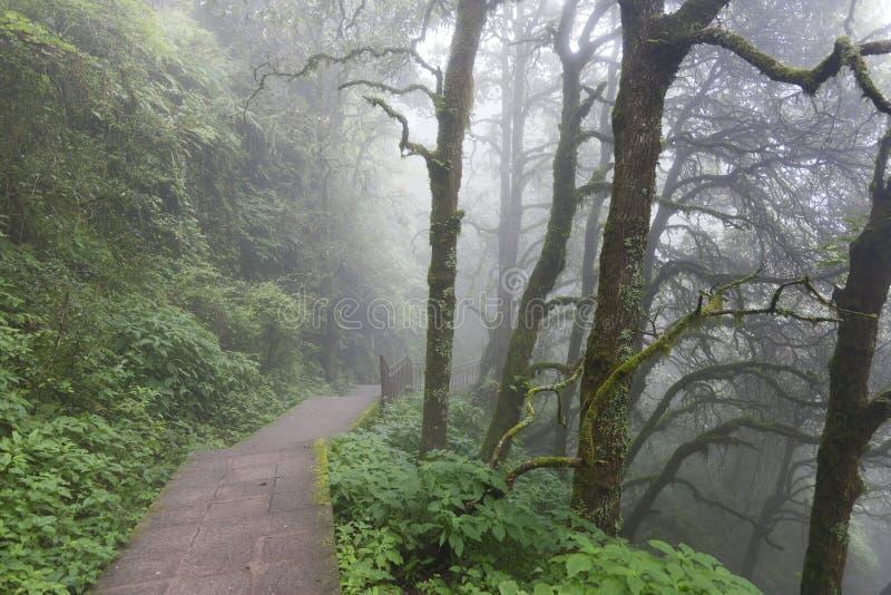 有薄雾的路森林 库存照片