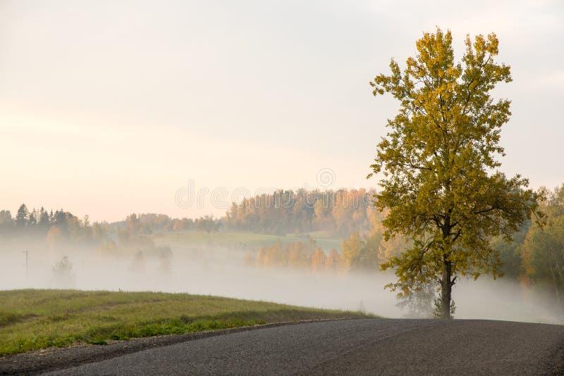 有薄雾的领域和草甸在雨以后在夏天 库存照片