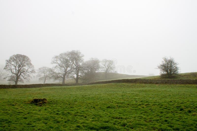 有薄雾的风景在Wharfedale 免版税库存图片