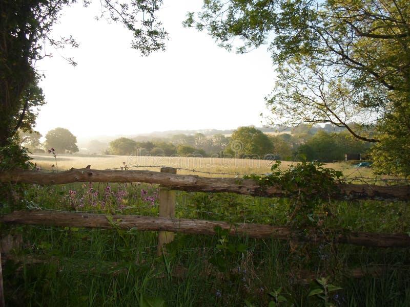 有薄雾的风景威尔士篱芭领域日出树篱 免版税库存照片
