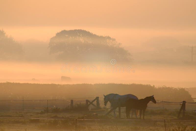 有薄雾的马 库存照片