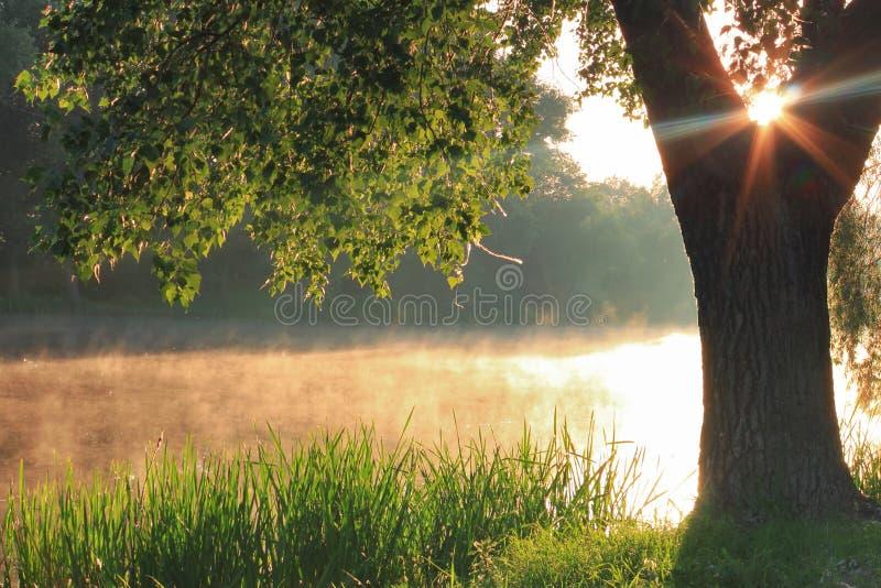 有薄雾的黎明 免版税库存照片