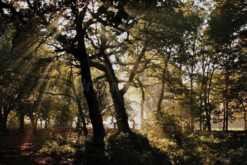 有薄雾黑暗的森林 库存照片