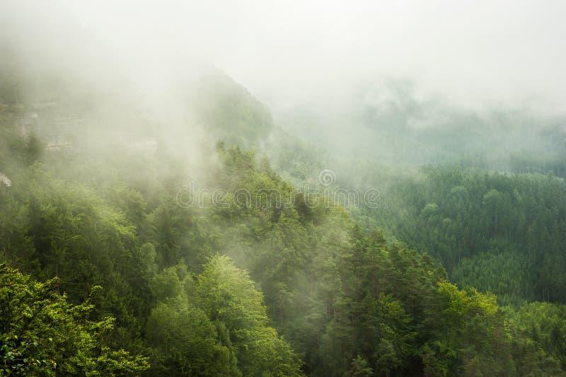有薄雾 免版税图库摄影