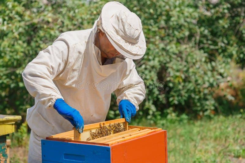有蜂窝的蜂农 图库摄影