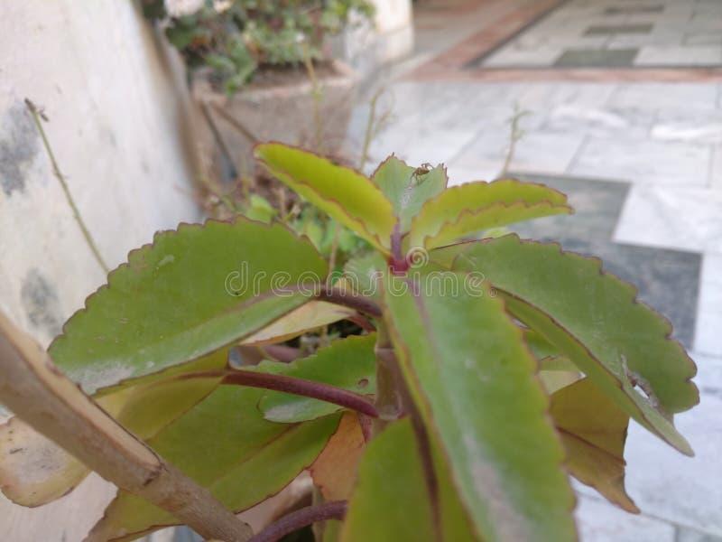 有蜘蛛的叶子 库存照片