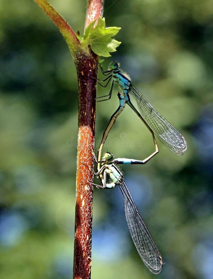 有蜻蜓的乐趣 库存照片