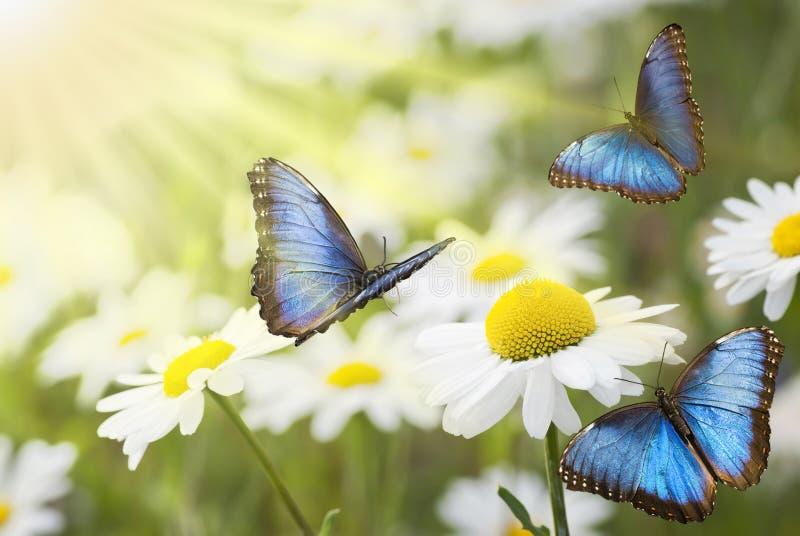 有蝴蝶的晴朗的草甸 库存图片