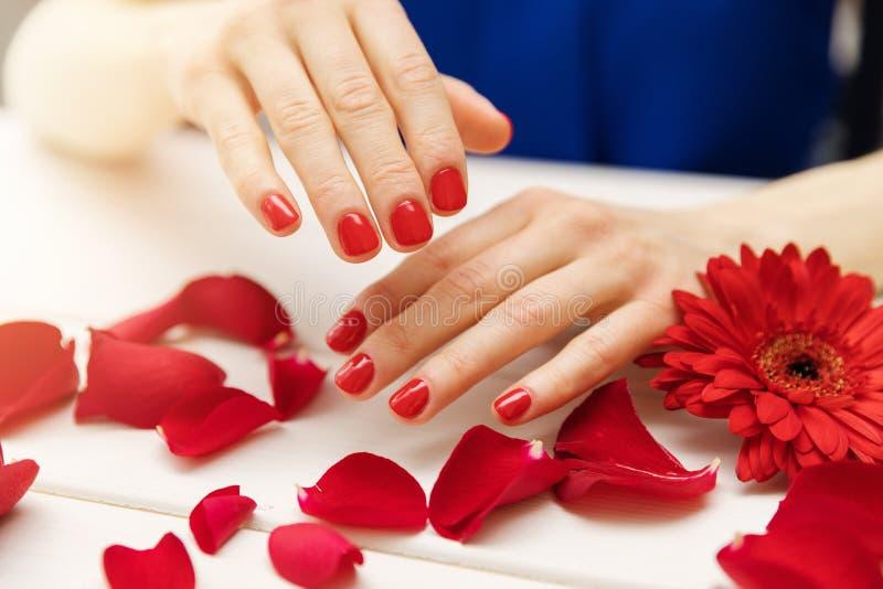 有被修剪的红色钉子的妇女手 免版税库存照片