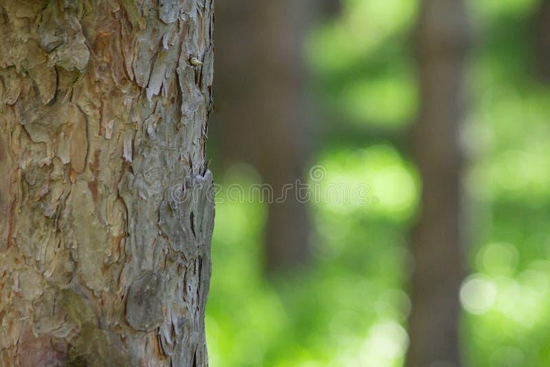 有被弄脏的背景绿草的情感森林与在一个梦想的温暖的风景的空的自然空间 免版税库存图片