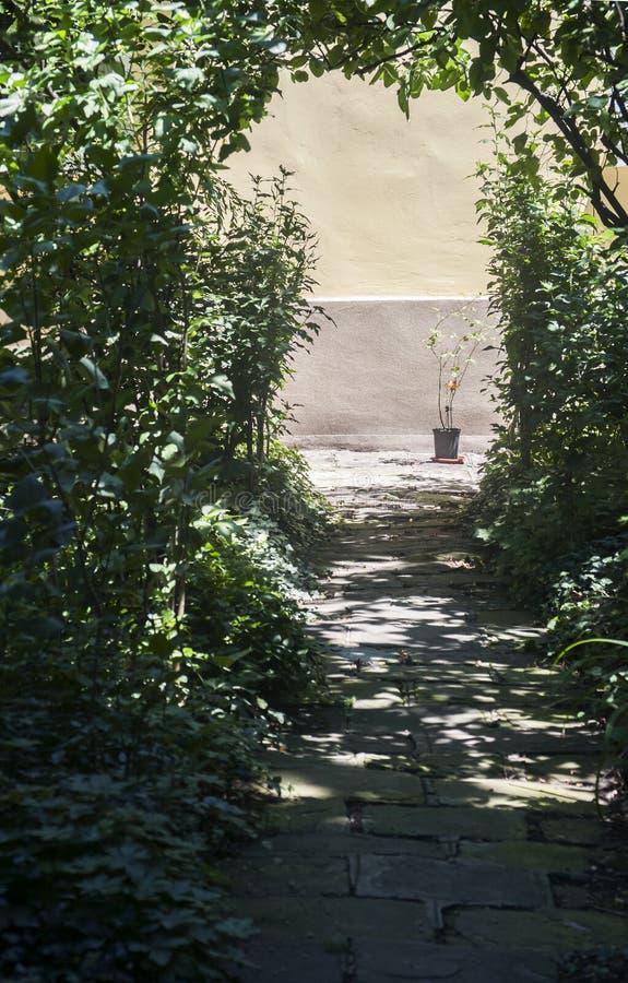 有被日光照射了植物的花盆 库存照片