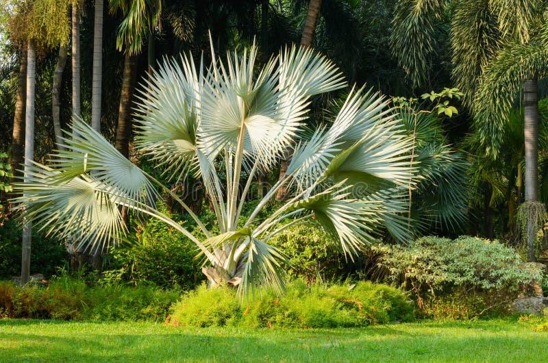 有装饰的棕榈树的新鲜的自然公园 库存图片
