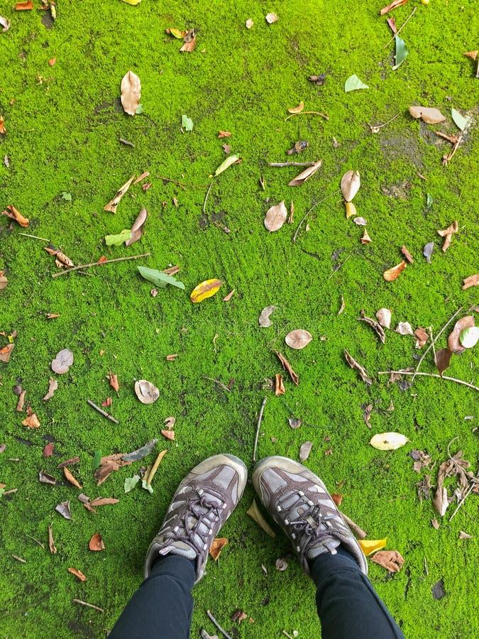 有褐色的妇女远足鞋子走在绿色青苔和干le的 免版税库存照片