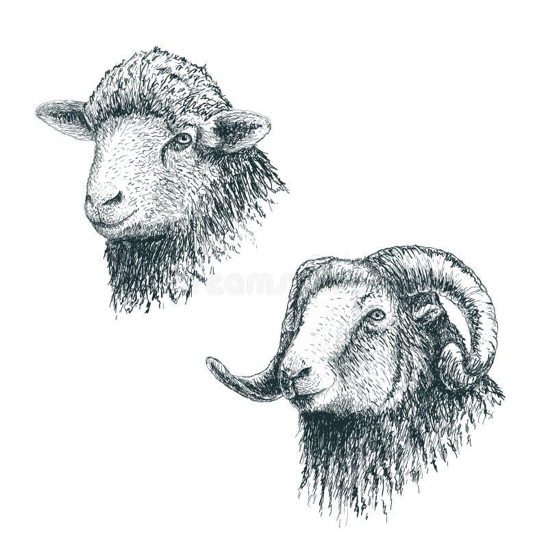 有角的公羊和羊羔 皇族释放例证