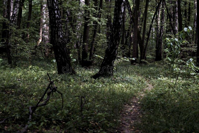 有许多树的黑暗的喜怒无常的有薄雾的重的森林道路 库存图片