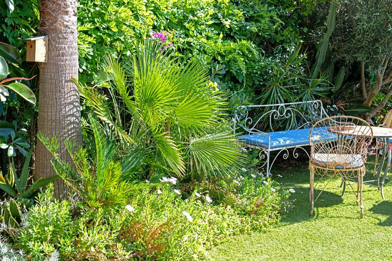 有许多的一个非常绿色庭院植物 库存图片
